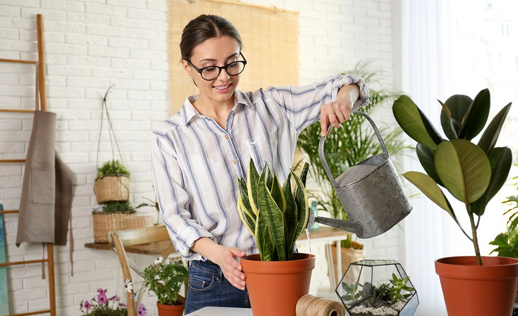 plants relieving stress